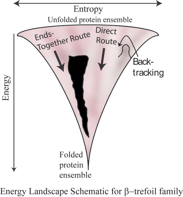 As the protein folds its randomness and entropy decrease, but its enthalpy decreases too; the net effect is one precise fold that minimizes µ.