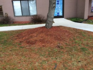 Mulch is good, this is too much concentrated by the tree trunk. Use only 2 inches and spread it out to save water and weeding.